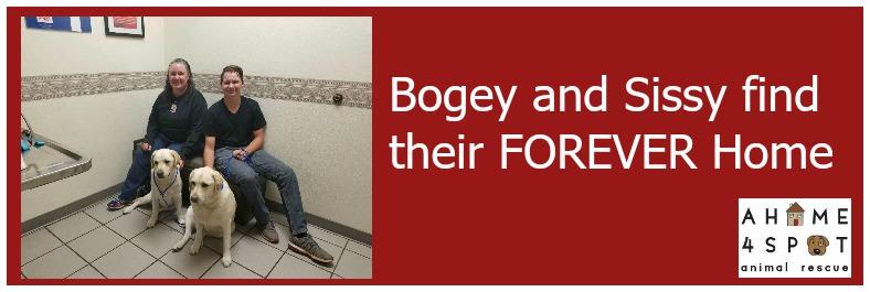 bogey-and-sissy_banner